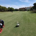 amateur golf tournaments in spain to play